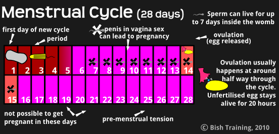 Menstrual Cycle When Can You Get Pregnant 20